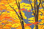 Higashiyama Kaii Glowing autumn leaves