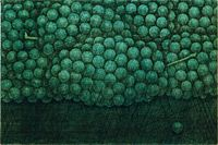 Hamaguchi Yozo Green grape