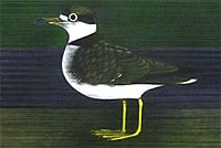 Kayama Matazo Venus Comb and Plover