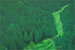 Higashiyama Kaii Green Ravine (new reprint picture)