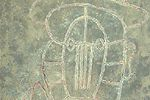 タマヨ 青い背景の頭部